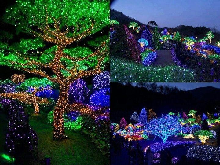 19eb150cf24b2d4e4d4500705359ef7b - Savannah Botanical Gardens Christmas Lights 2018