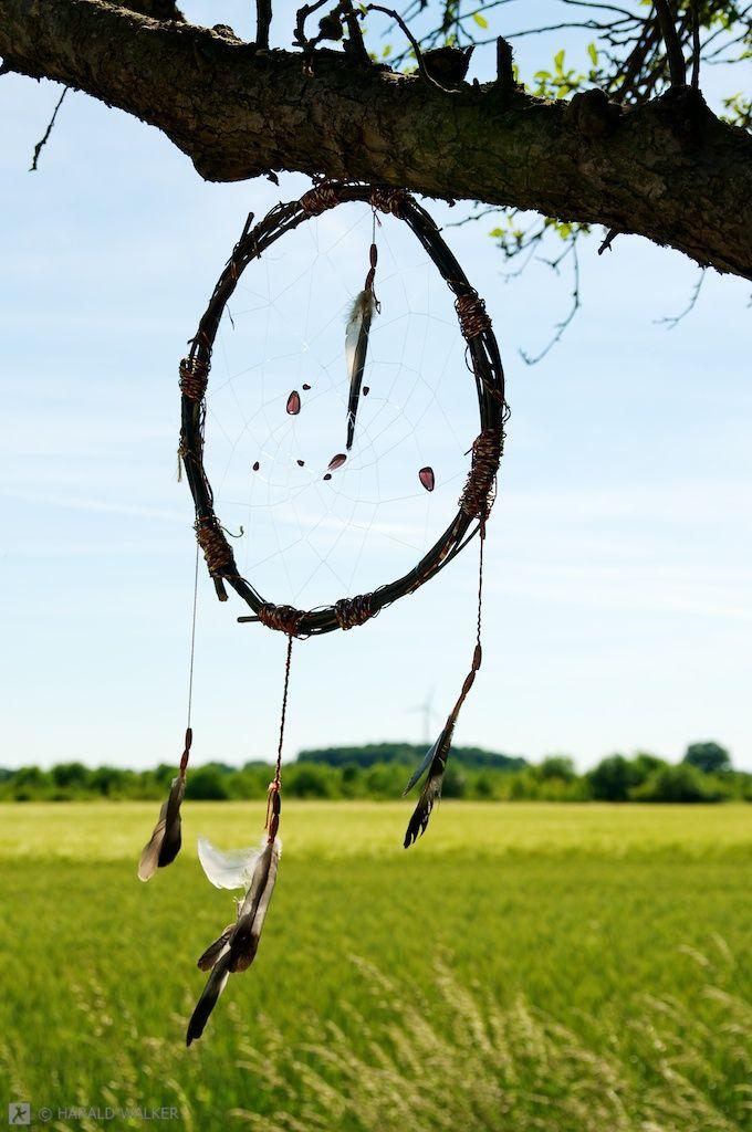 Dream Catcher in Tree