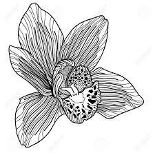 r sultat de recherche d 39 images pour orchid e dessin dessin. Black Bedroom Furniture Sets. Home Design Ideas