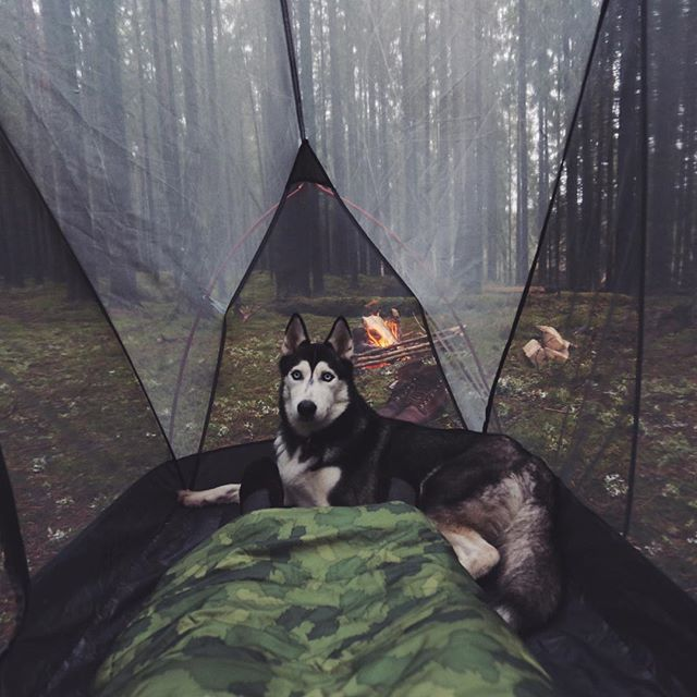 @polerstuff @campingwithdogs #polerstuff #campvibes #yumisupercamper@live.outdoors