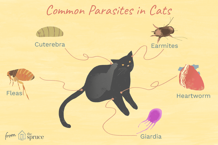 What To Know About Feline Parasites Fleas Ticks Worms And Mites Flea Control For Cats Fleas Cat Skin