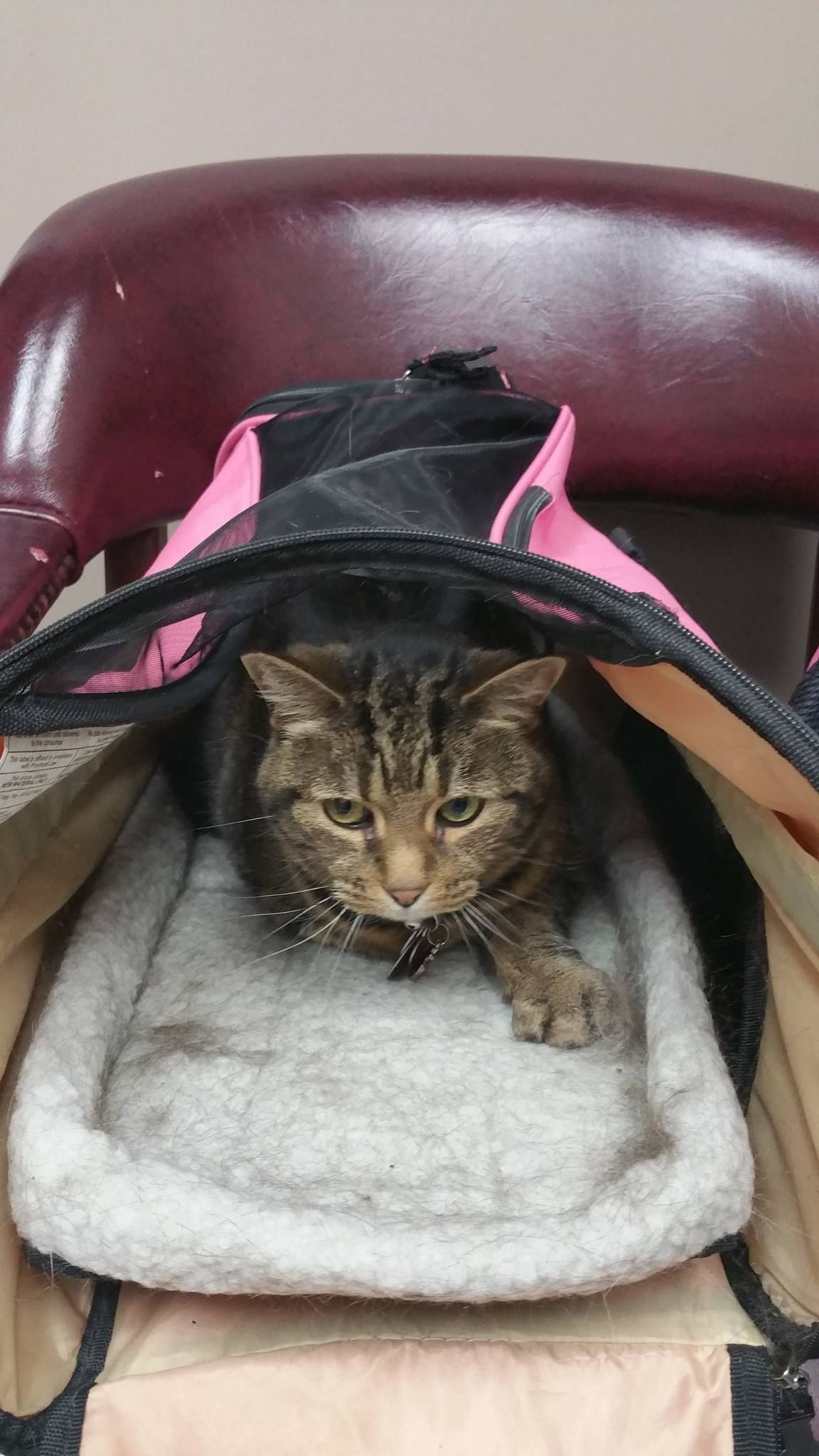 Candy Worton. Candy is relaxing in our Cat Friendly