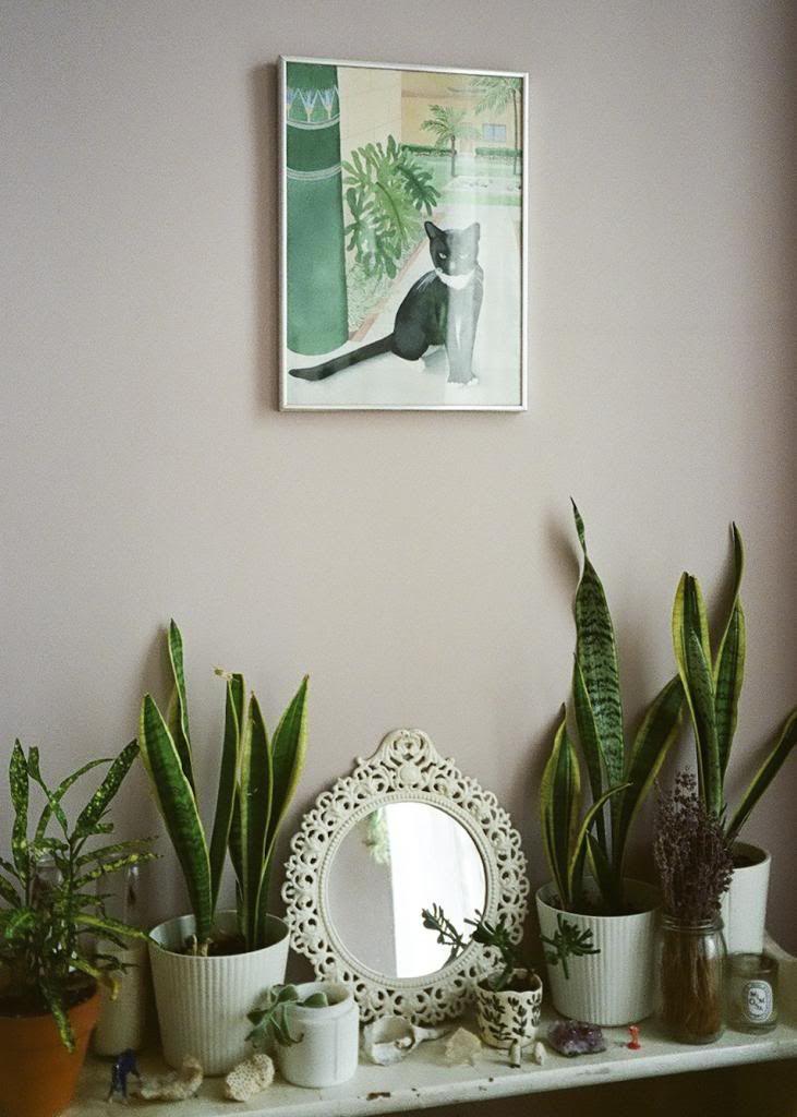 encore des plantes et des jolis trucs sur les murs