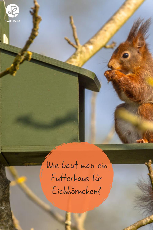 eichhörnchenfutterhaus selber bauen anleitung  tipps