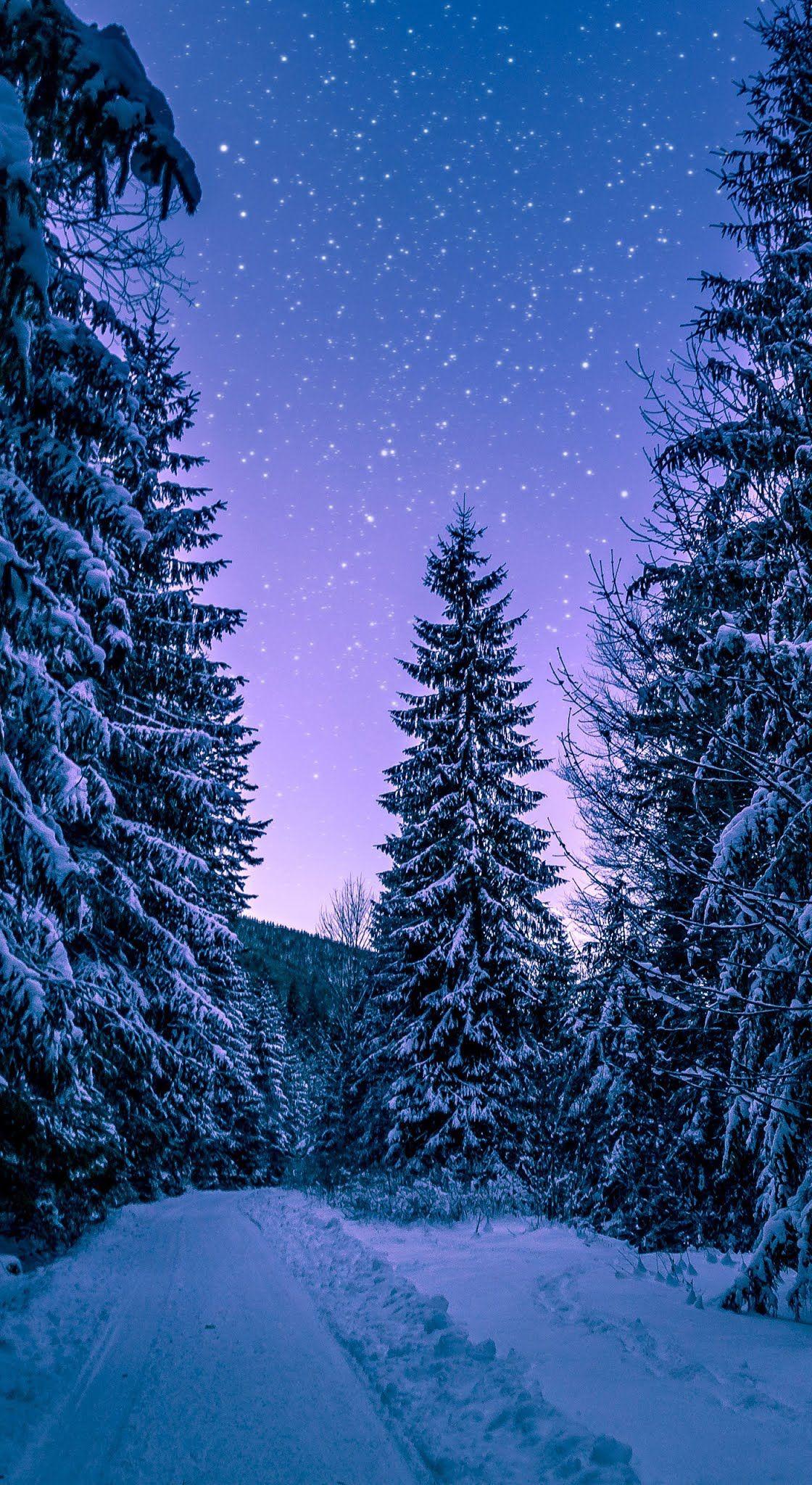 Branches Cold Conifers Mobile Wallpaper Winter Cold Forrest Trees Zimnie Sceny Zhivopisnye Pejzazhi Pejzazhi