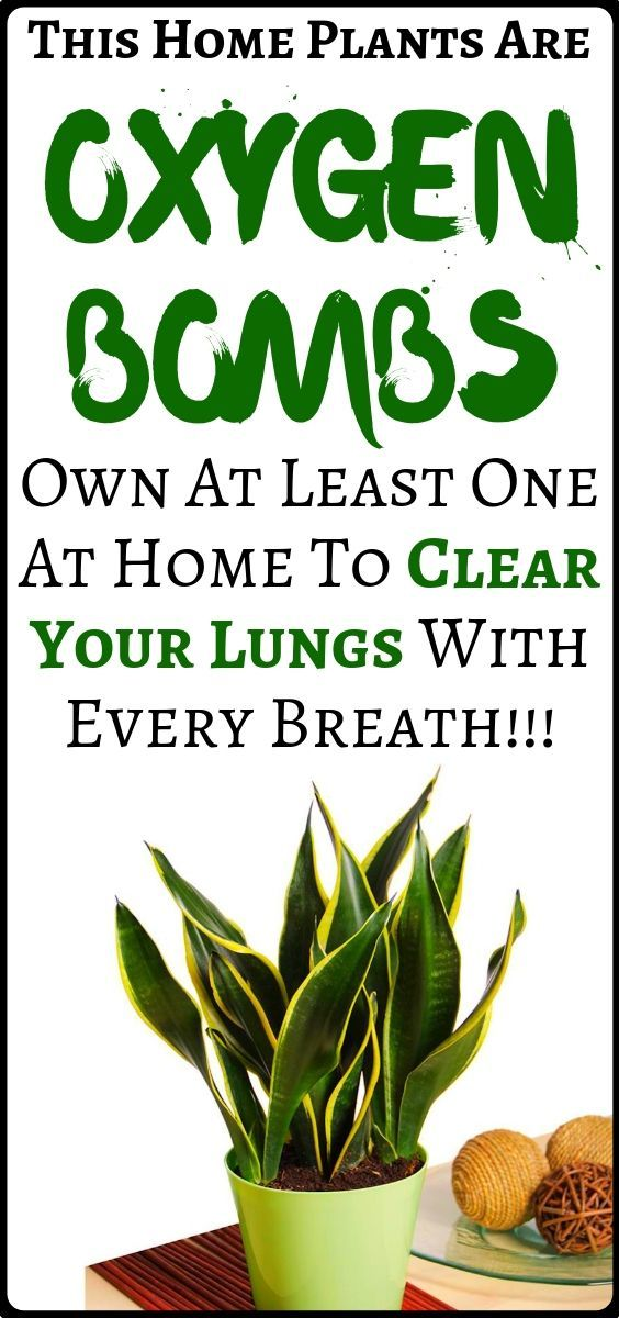 #fitness #health #oxygen #health #breath #plants #clear #every #lungs #these #bombs #least #with #ke...