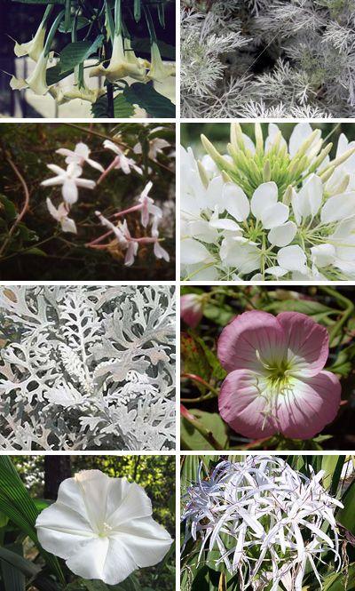 Ordinaire Moon Garden Species