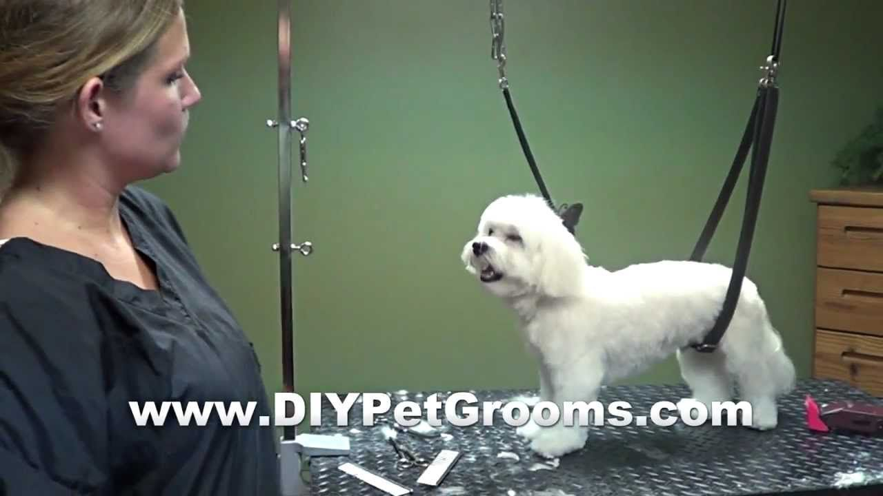 How to groom a maltese puppy cut do it yourself dog grooming how to groom a maltese puppy cut do it yourself dog solutioingenieria Choice Image