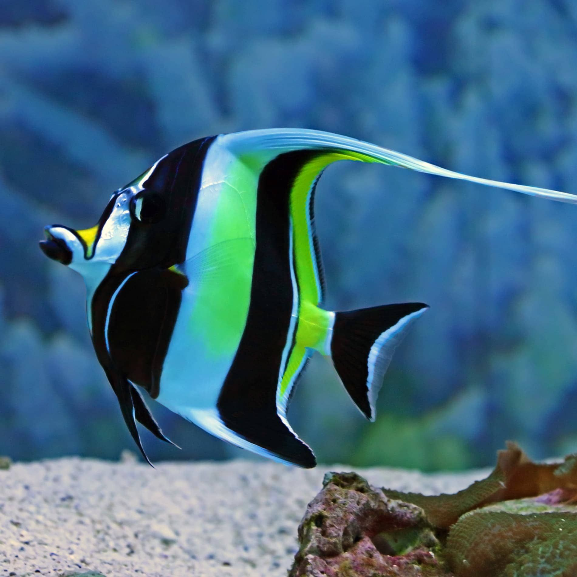 Pin By Arlette Rodriguez On Animals Insects Underwater Animals