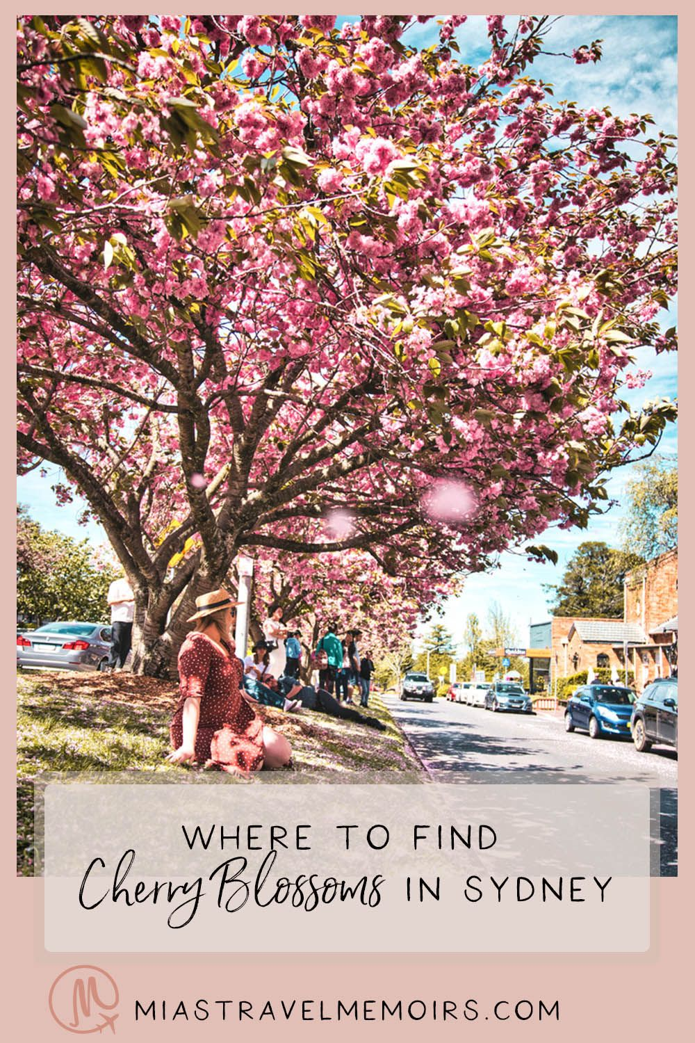 Where To Find The Cherry Blossoms In Sydney Australia In 2020 Day Trip The Blue Mountains Trip