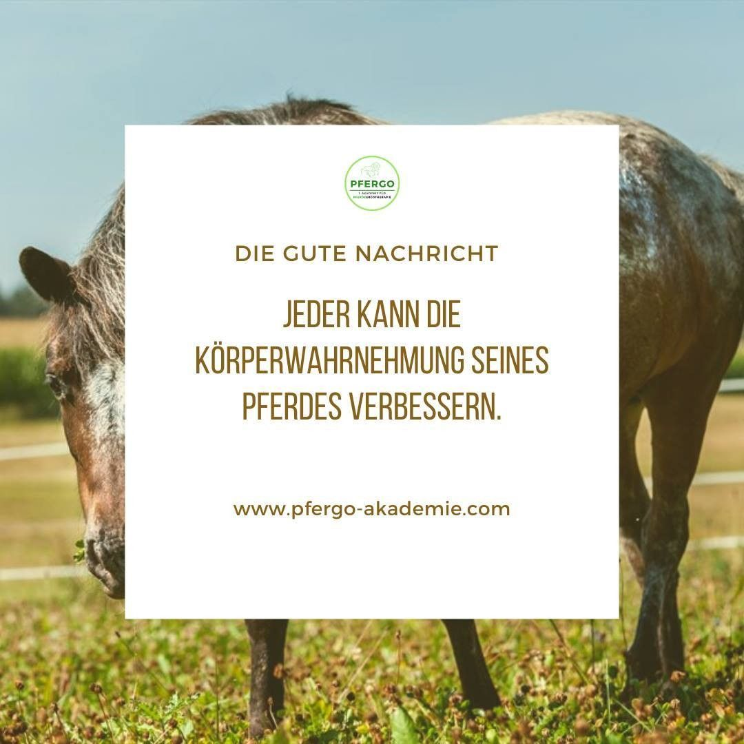 Korperwahrnehmung Verbessern In 2020 Dressur Dressurreiten Pferd