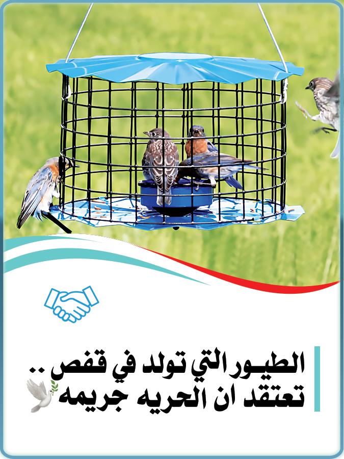 الطيور التي تولد في قفص تعتقد ان الحريه جريمه Box Fan Home Appliances