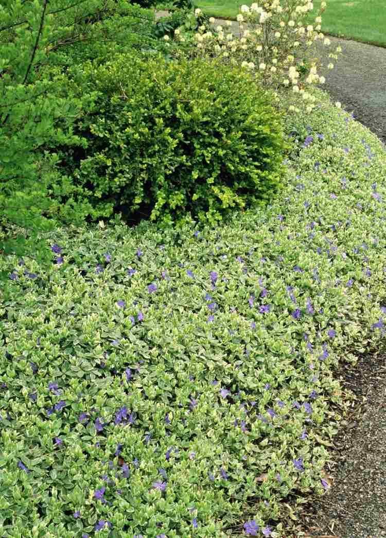 plantes couvre sol croissance rapide dans le jardin moderne jardin pinterest plantes. Black Bedroom Furniture Sets. Home Design Ideas
