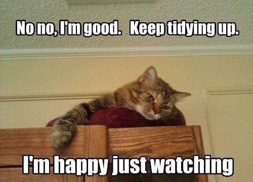 Cat Memes Clean Cat Memes Clean Funny Cat Pictures Cat Memes