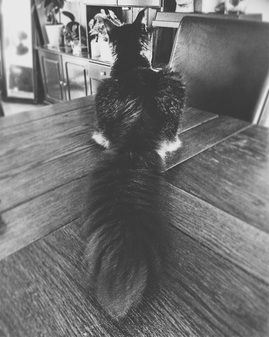 Fluffy tail #mainecoonlife #mainecoon_no #mainecoonbaby #mainecoonoftheday #mainecoon_id #mainecoonstagram #mainecooncats #mainecoonkitty #mainecoonworld #mainecoons #mainecoonfun #mainecoonlovers #mainecoonkittens #mainecoon #mainecoonlove #mainecoonsofig #mainecooninstagram #mainecoonhouse #mainecoon_feature #mainecoonsofinstagram #mainecoongram #mainecooncat #mainecooncorner #mainecoonlover #mainecoonofinstagram #mainecoonkitten #cat#cats#gentle#giant