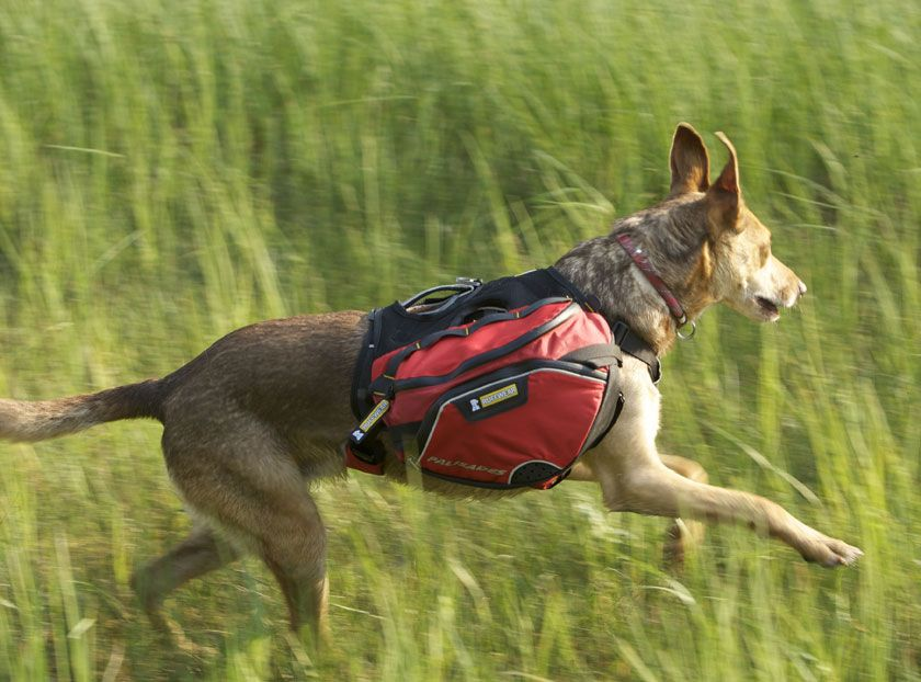 Palisades Pack Dogs Backpacking Dog Activities