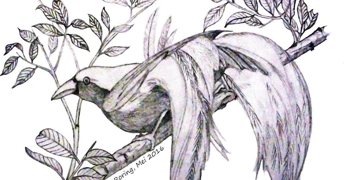 Sketsa Gambar Burung Cendrawasih Gambar Sketsa Dan Unuk Yang Admin Berikan Ini Yakni Kumpulan Gambar