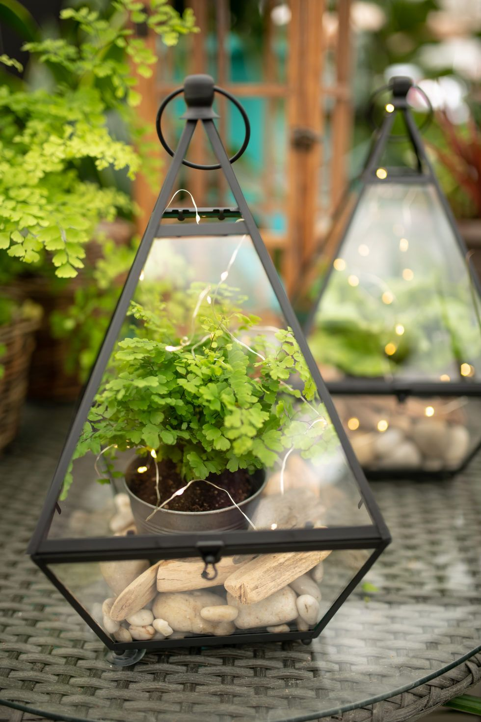 Magic Winter Lights Beautiful terrariums, Diy plant