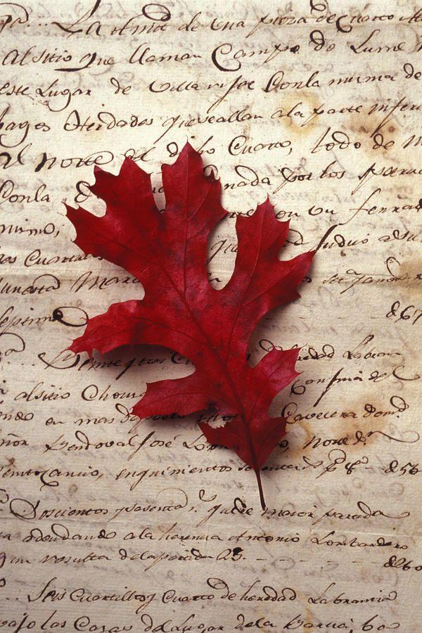 Leaf On Letter