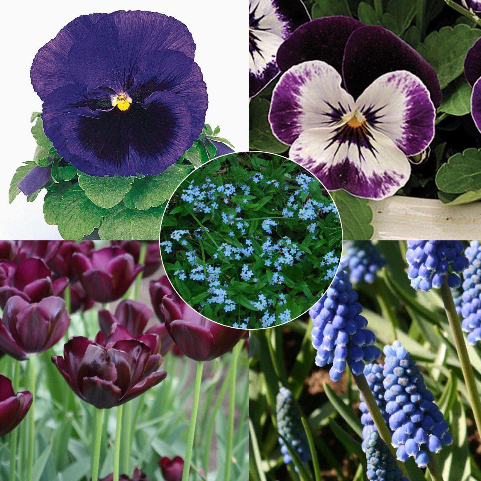 Collection Printemps bleu nuit Bulbes et fleurs