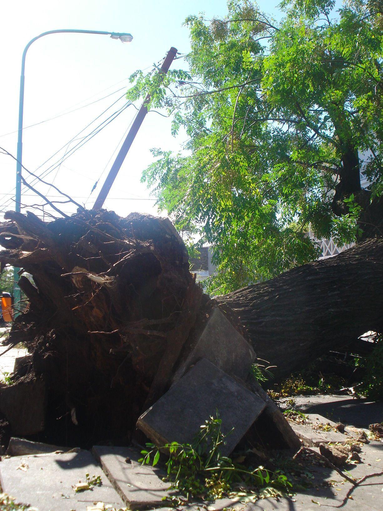 #argentina #tormenta #tornado #storm  Arranco toda la vereda el arbol ! :D toda la potencia :|
