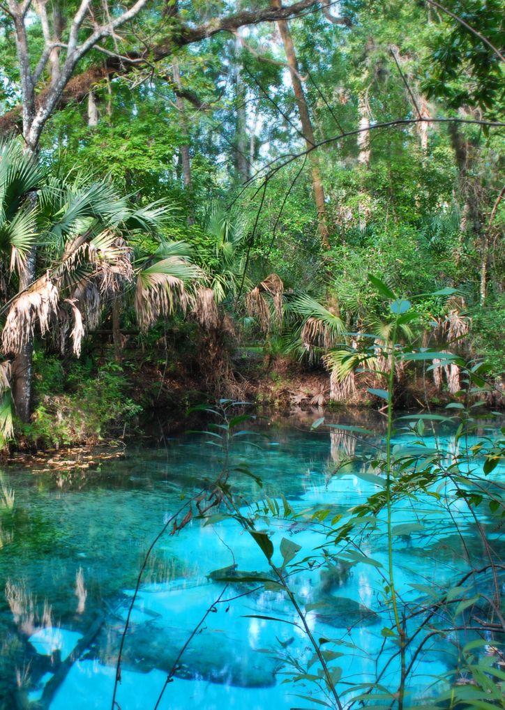Juniper Springs Recreation Area, Silver Springs, Florida by Bpchern ...