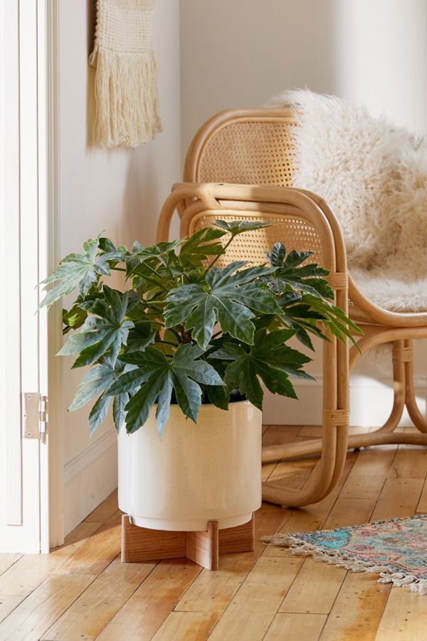 25 Cute Home Goods Every Plant Lady Needs | Bedroom plants ...