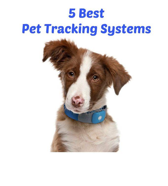5 Best Pet Tracking Systems Reviews And Recommendations Pets Pet Tracker Dogs