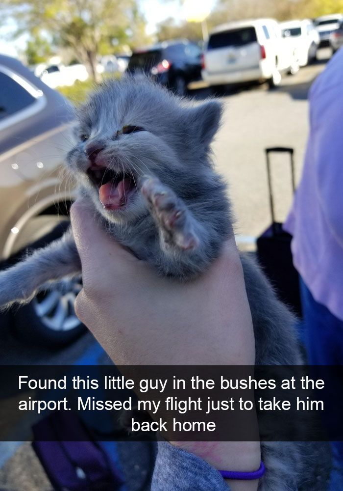 Cats Funny Snapchats In 2020 Cute Baby Animals Funny Animals Funny Cat Fails