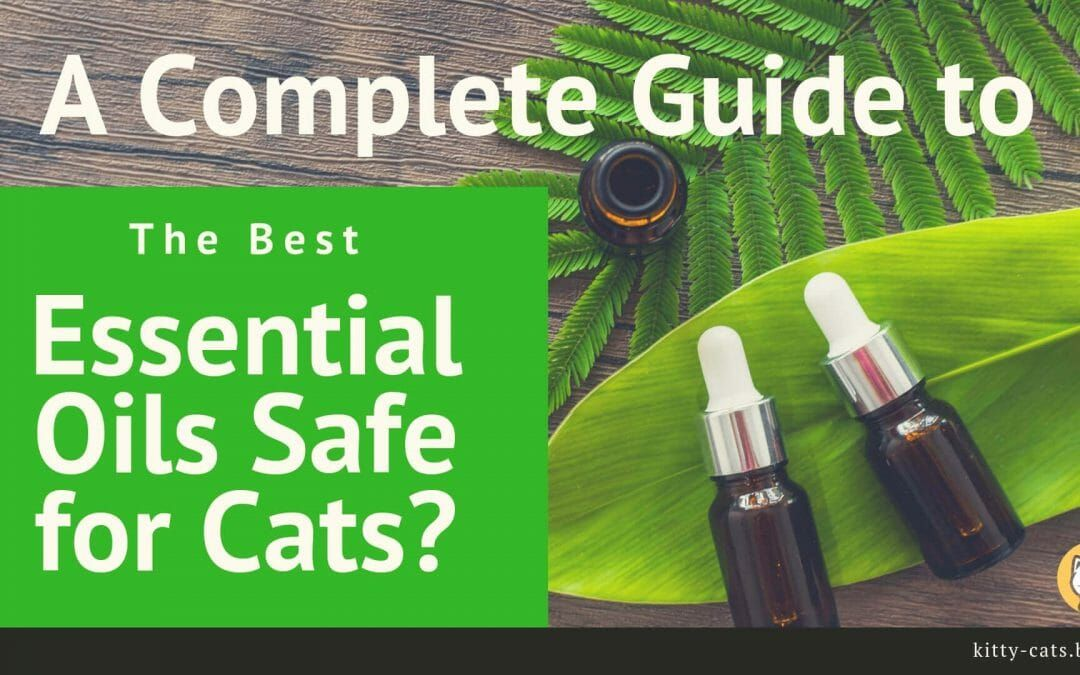 Soothing Essential Oils For Cats