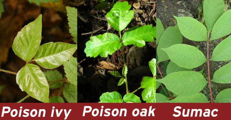 19f36adc21fa9f53f322b731bfe28b32 - How To Get Poison Ivy Oil Out Of Clothes