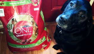 Take The The Purina One 28 Day Challenge! Sponsored
