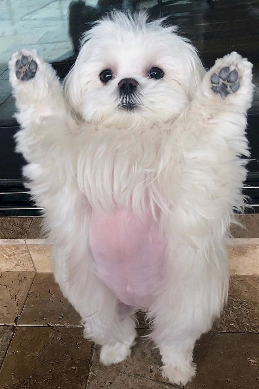 I Believe I Can Fly Cuteness Aww Love Very Cute Dogs Cute Dogs Cute Animals