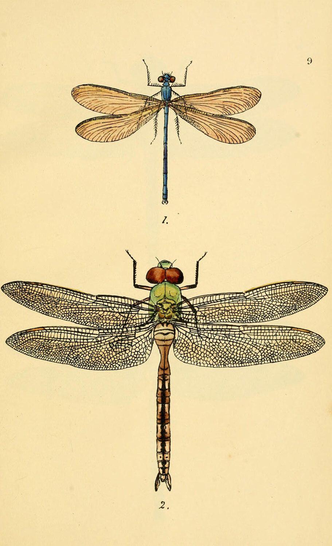 Vintage Dragonfly Art Print Printable Digital