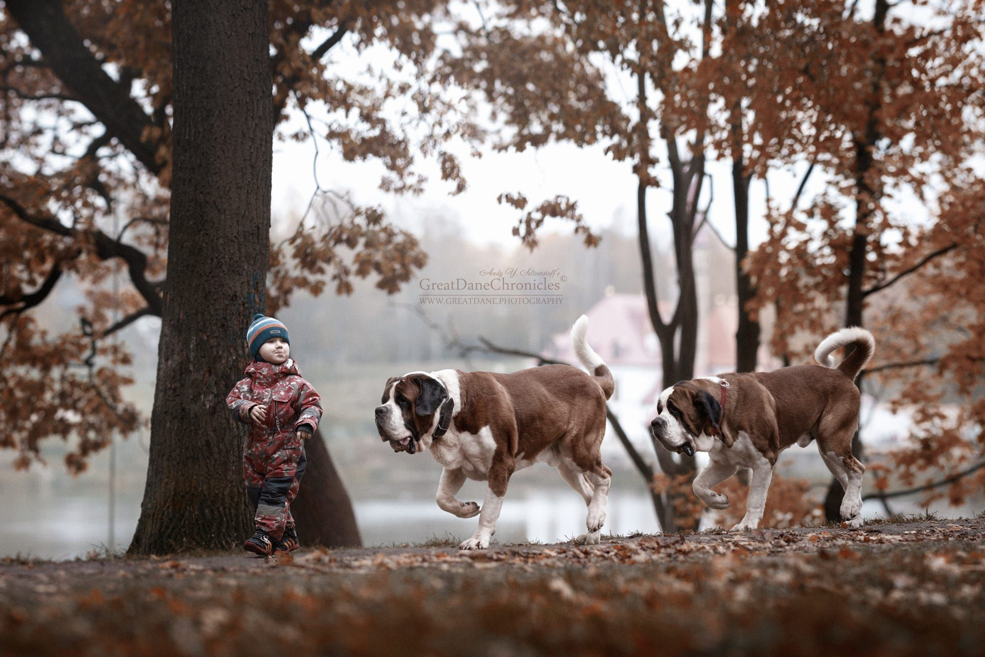 All Together We Follow Me By Andy Seliverstoff On Px - Tiny children and their huge dogs photographed in adorable portraits by andy seliverstoff