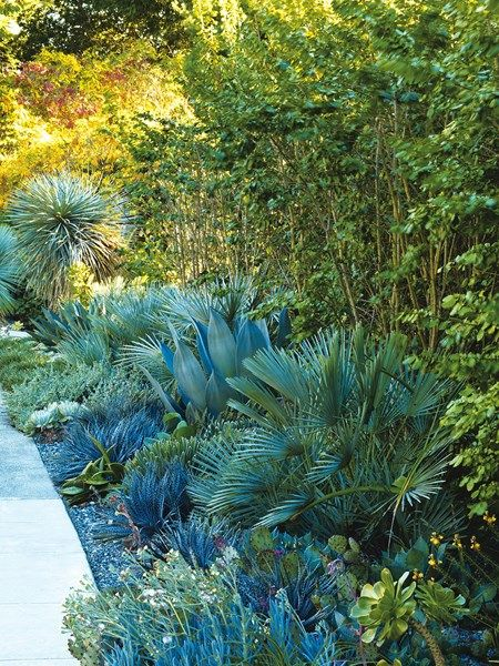 Mediterranean Berkeley Garden Photo Gallery Gallery Garden