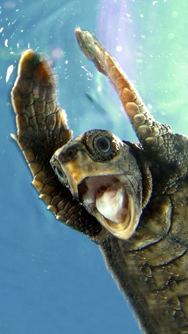 Sea Turtle Wallpaper for iPhone - WallpaperSafari