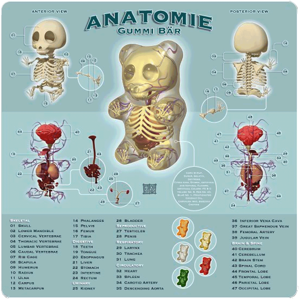 Gummy Bear Anatomy. If I had an office this would be in it ...