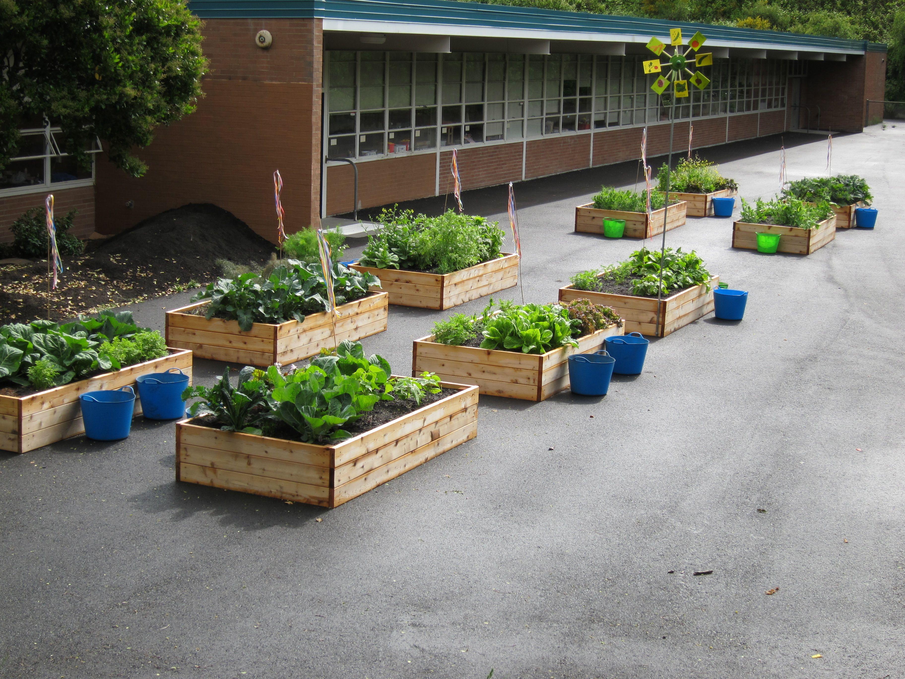 Love The Idea Of Raised Beds On Concrete School Garden 400 x 300