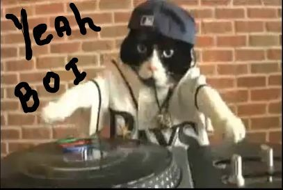 cat rapper- capper.