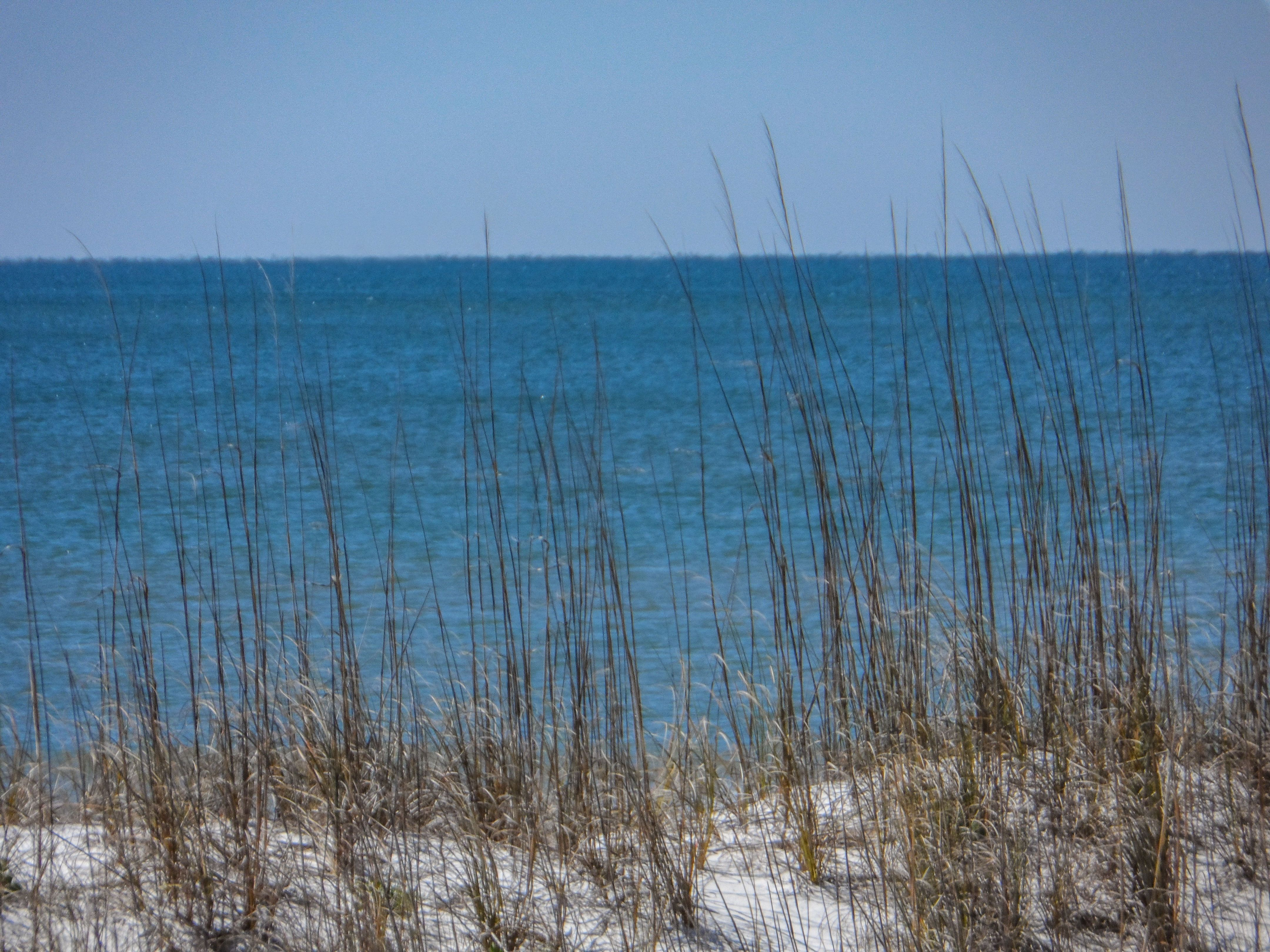Pensacola Dune Grass Get A Framed Print With Quotes 815 439 3993