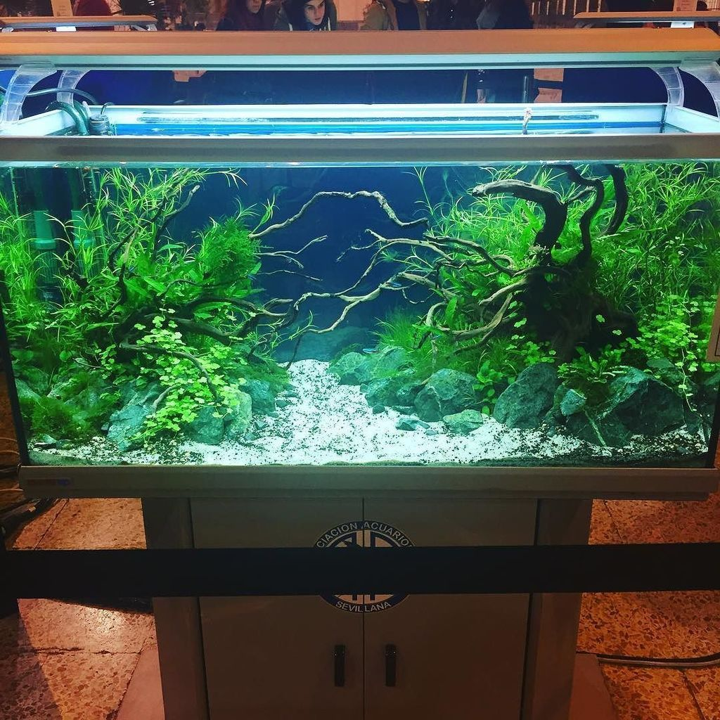 Aquacool on aquariums