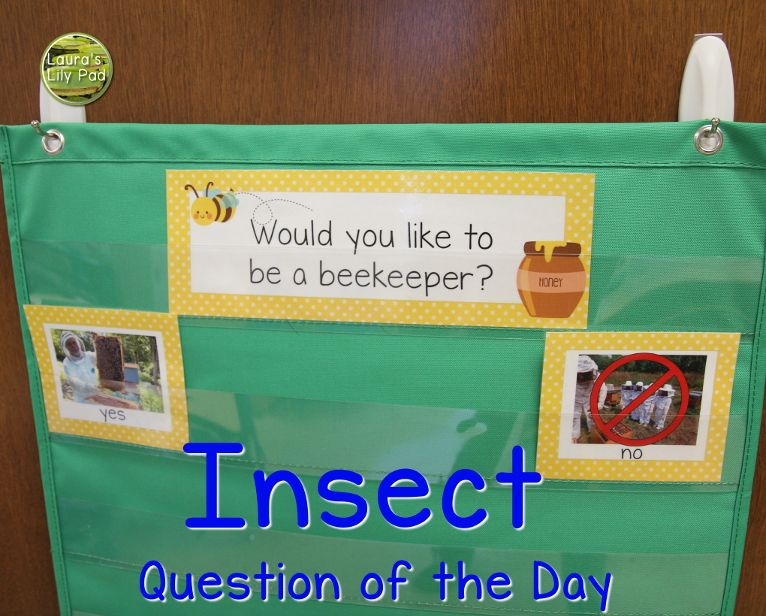 Bugs, Insects, and Spiders in PreK Insects preschool