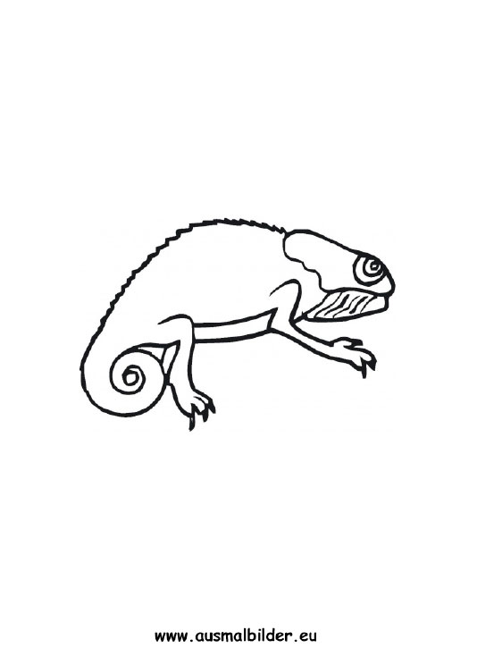 Ausmalbild Chamaleon Zum Kostenlosen Ausdrucken Und Ausmalen Ausmalbilder Ausmalbilderchamleon Malvorlagen A Ausmalen Ausmalbilder Tiere Ausmalbild
