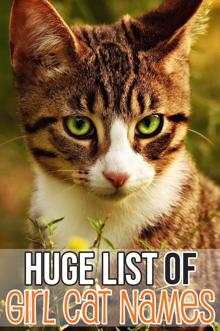 Felineliving Net Girl Cat Names Cat Names Pet Names