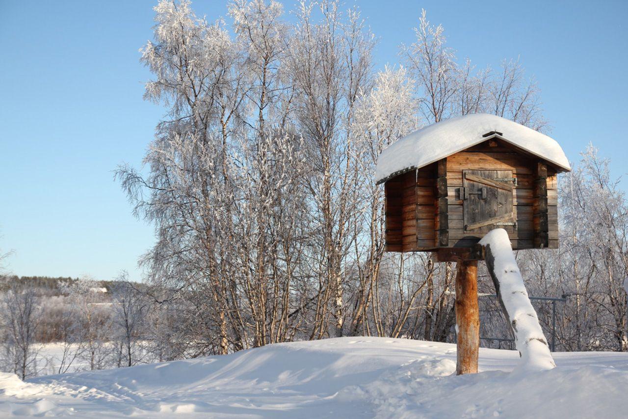 elevated chicken coop in karesuando sweden coops and cabin
