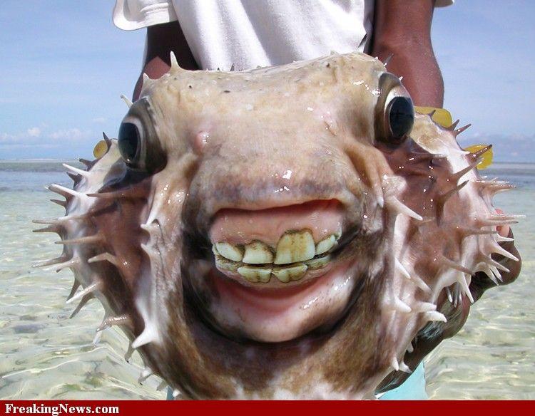 Weird Ugly Fish 1