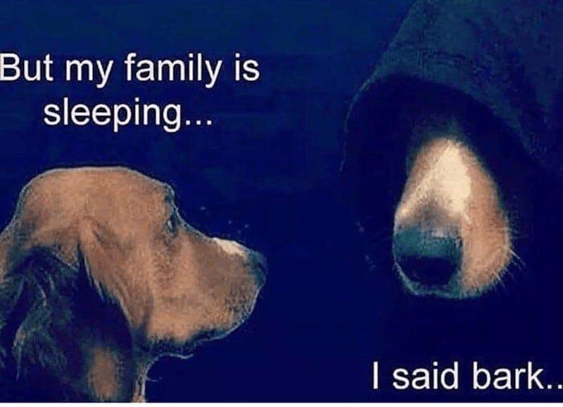 Bahahahaha Dog Memes So Funny Lost My Dog Meme Animals Doing Funny Things Dog Barking At Night Dog Memes