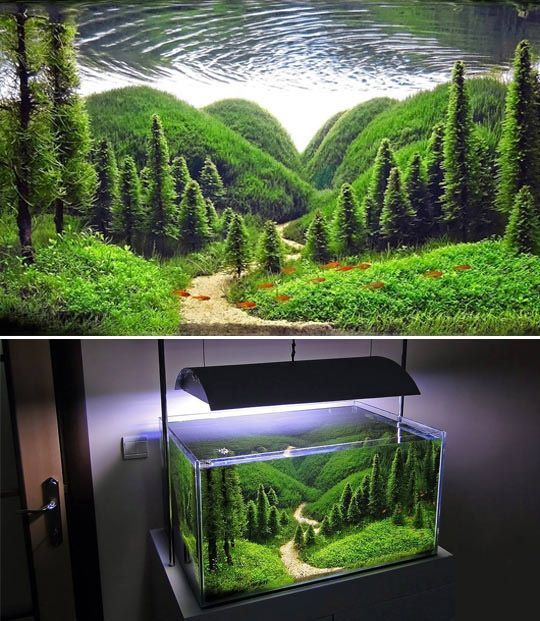 Study Room With Aquarium: This Is Sometimes Confused With The