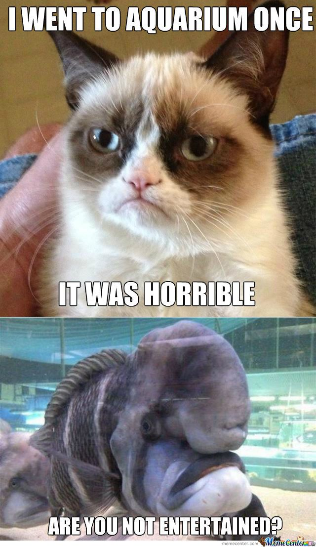 19f96091d9a1747dafb0ab747abe0e01 meme center largest creative humor community grumpy cat,Meme Grumpy Cat